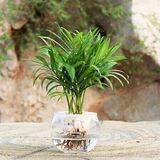 办公室创意水培绿植袖珍椰子电脑宝贝防辐射净化空气懒人好养植物