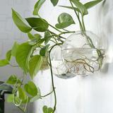 创意玻璃花瓶透明客厅简约现代壁挂富贵竹风信子绿萝水培花瓶装饰