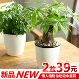 幸福树发财树盆栽水培植物盆景绿植办公室盆栽绿色植物室内吸甲醇