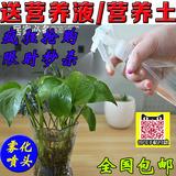 日本轻松熊30ml美容小喷壶 爽肤水透明喷雾瓶 细雾 便携补水喷瓶