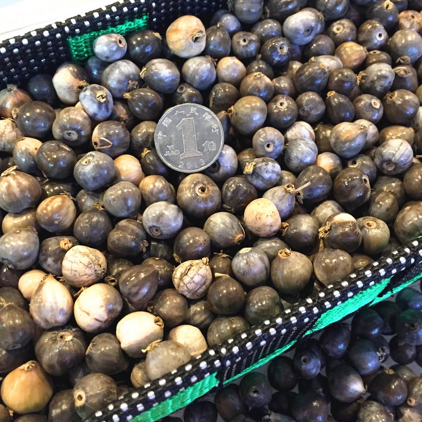 草珠子_纯天然草珠种子草珠子散珠草珠子种子草珠天然草珠门帘商品图片价格