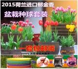 【天天特价】球根冬季花卉盆栽土培郁金香种球套餐含盆植物种子