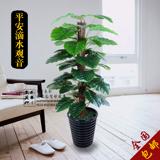 仿真植物滴水观音盆栽摆件大型落地客厅盆景仿真树塑料绿植物假花