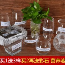Glass hydroponic plant vase simple creative flowerpot transparent water raising green radish Guanyin bamboo flower vase container vessel