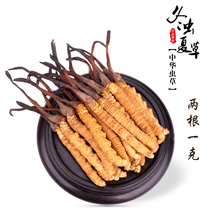 2018 Tibet straight hair 2 Root 1 gram authentic Tibet that song cordyceps authentic wild natural cordyceps bulk