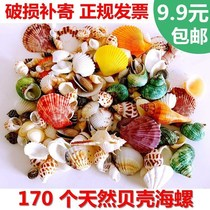 Starfish ornament shell crafts fan-shaped ornaments to brighten the stall jewelry natural large pearl seaside debris