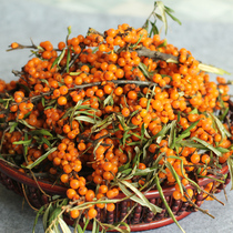 Mountain West specialty Lvliang wild sea buckthorn wild sea buckthorn fruit fresh fruit wild sea buckthorn
