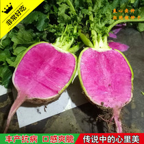 Vegetable seeds sweet radish full of Red Ice sugar heart radish cherry radish high-yielding four seasons sowing