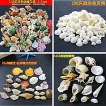 Crafts small shell nursery decorations handmade conch crafts shell material fan-shaped tourist area