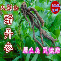 2019 Dabie natural wild purple salvia section of the original root of salvia miltiorrhiza purple salvia sulfur-free 500g