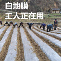 New material thickened agricultural plastic silver black reflective film white film 1 M 1 5 M 2 m wide weeding black film