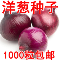 Yifang seed industry for sale vegetable seed onion seed ball onion round onion Jade onion four seasons can be broadcast