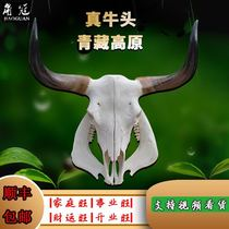 Cattle skull crafts Yak skull ornaments real cattle sheep skull specimens handmade wall hanging cattle head