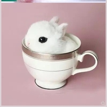 Rabbit Live small pet Lop rabbit tea cup rabbit mini rabbit Princess rabbit grow up a little rabbit