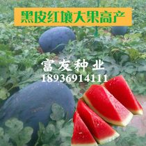 Taiwan black beauty watermelon seeds black watermelon red soil yellow soil big watermelon seeds four seasons sowing fruit vegetables