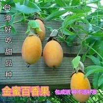 2018 new 2018 new home accessories new varieties of gold honey passion fruit seedlings pure sweet banana fruit sweet honey red
