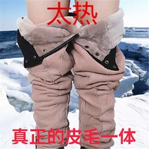 Sheep scissors fur One leather pants leather male lady sheep fur high waist cotton pants pants inner gall winter middle-aged and elderly