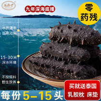 Hong Han Tang 9 years dry sea cucumber dry goods 50g Dalian wild sea cucumber infiltration Liao ginseng fresh seafood gift box