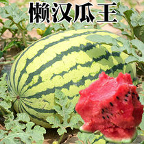 Watermelon seed giant lazy melon King Kirin Sweet King Four Seasons sowing fruit precocious crisp sweet juicy large watermelon seeds