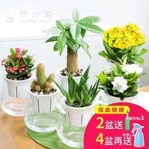 Vegetation aloe potted plants indoor college students glass bottles outdoor kindergarten all year round potted flowers flowers