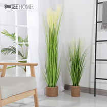 Nordic ins wind simulation plant reed grass fake grass potted ornaments living room indoor floor green plant decorative bonsai