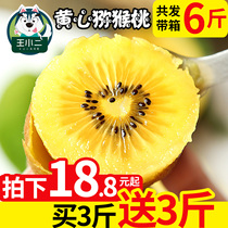 (Buy 1 Get 1 free) yellow heart kiwi fruit fresh kiwi Mi monkey peach mud monkey peach whole box 6 pounds