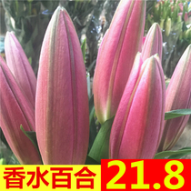 Flowers straight batch of Yunnan base straight Lily Wholesale City Express carnation water flower rose straight for